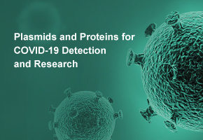 Plasmids Used for 2019-nCoV Detection and Research are In Stock Now
