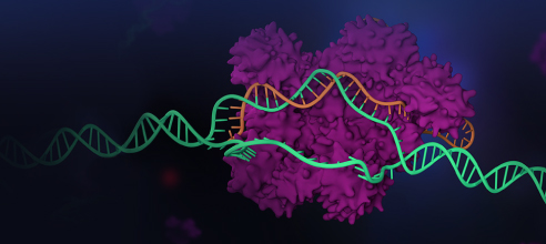 CRISPR Advances